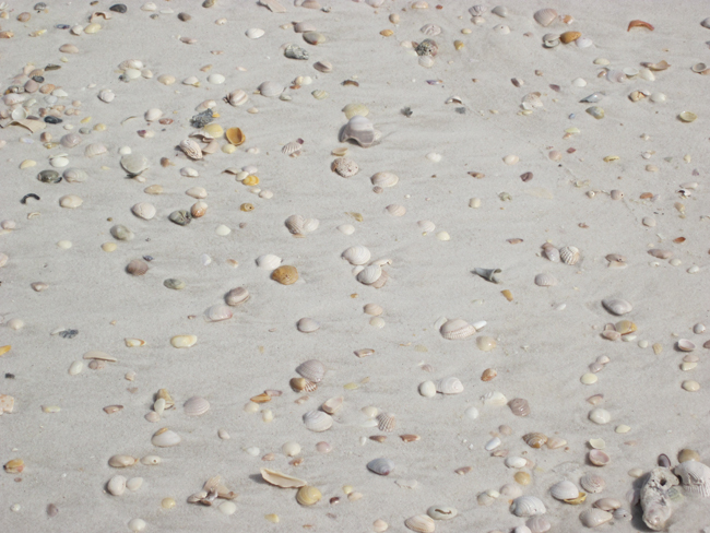 Shells on Beach at Dog Island