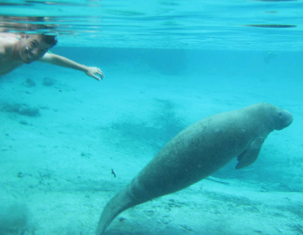 Conrad Swimming with Manatee in Three Sisters Spring