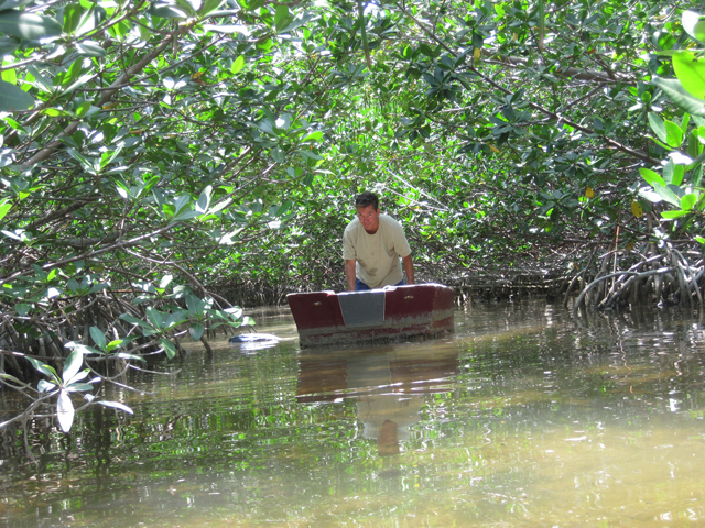 This lost dinghy was deep in the mangroves.