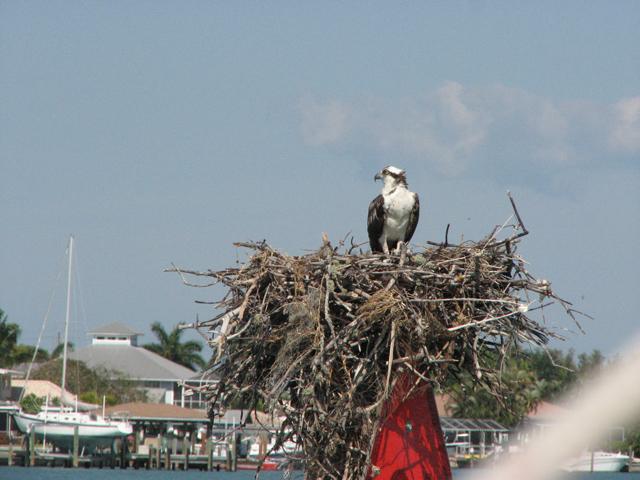 Osprey Nest Again